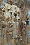 Old climbing wall. Grunge texture Royalty Free Stock Photography