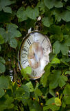 Old clock handing on tree among green leaves Royalty Free Stock Images