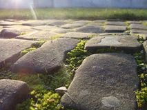 Old cobble stone road with moss grass and evening low sun Stock Images