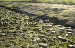 Old cobble stone road with moss grass and evening low sun Stock Image