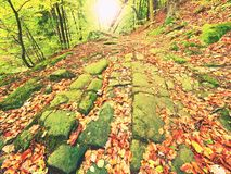 Old cobble stone way lined by beech trees  in deep gulch in autumn forest. Fresh orange leaves Royalty Free Stock Images
