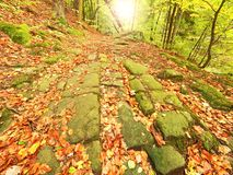Old cobble stone way lined by beech trees  in deep gulch in autumn forest. Fresh orange leaves Stock Images