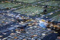 Old cobblestone on the park Royalty Free Stock Photos