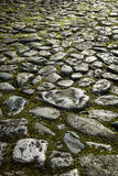 Old Cobblestone Pavement. Close-up of an old cobbled, mossy path Stock Images