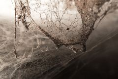 Old cobwebs on the wall as background.  Royalty Free Stock Images
