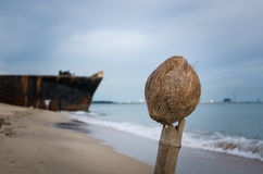 Old coconut on the beach Stock Images