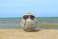 Old coconut lounging on the beach Royalty Free Stock Photo