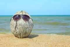 Old coconut lounging on the beach Stock Image