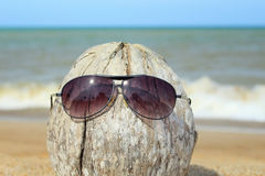 Old coconut lounging on the beach Stock Images