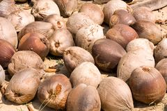 Old coconuts Royalty Free Stock Photography