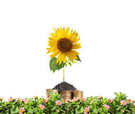 Old coins and plant them Royalty Free Stock Photos