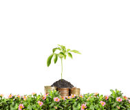 Old coins and plant them Stock Image