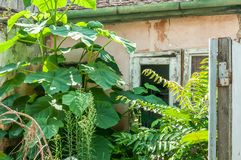 Old collapsed ruin and abandoned house in the jungle overgrown with green plants after ages Royalty Free Stock Photography