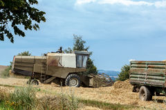 Old combine on field harvesting gold wheat Stock Image