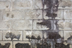 Old concrete block wall background Stock Images