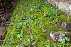 Old concrete Brick Wall with Moss. Stock Photo