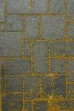 Old concrete floor in the flower garden. Yellow flowers fall on cement floor in the garden Stock Images
