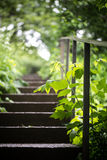 Old concrete stairs in booths. The old concrete stairs, in the green groves Stock Photography