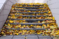 Old concrete steps, strewn with a lot of yellowing fallen autumn leave. S royalty free stock photos