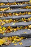 Old concrete steps, strewn with a lot of yellowing fallen autumn leave. S stock photography