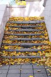 Old concrete steps, strewn with a lot of yellowing fallen autumn leave. S royalty free stock photography