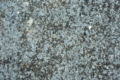 Old concrete texture background Royalty Free Stock Images