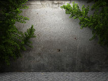 Old concrete wall and ivy Stock Photo