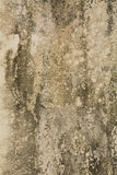 Old concrete. Wall with mildew Royalty Free Stock Photography