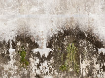 Old concrete wall with mold Royalty Free Stock Photo