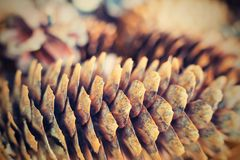 Old cone from a coniferous tree closeup in retro style Royalty Free Stock Images