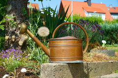 Old copper watering can in the garden. Old copper watering can in the summer garden with lavender in the background Stock Images