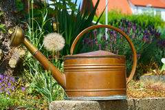 Old copper watering can in the garden. Old copper watering can in the summer garden with lavender in the background Stock Photography