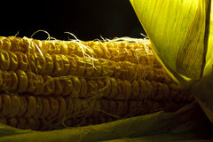 Old corn Stock Photography