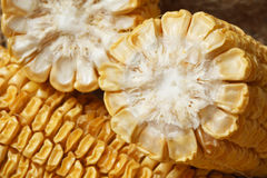 Old corn Royalty Free Stock Photography
