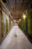 Old Corridor at Alcatraz Royalty Free Stock Photo