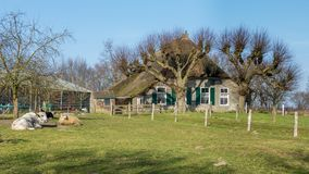 Old cottage with cattle Stock Photography