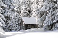 Old cottage and snowy fir trees in winter forest Royalty Free Stock Image