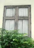 Old cottage wooden window and green plant fence Stock Photos