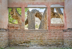 Old cottonwood tree through windows. Old cottonwood tree in a desert canyon as seen through windows of a ruined ghost town building stock images