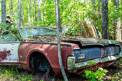 Old Cougar GT in Woods Stock Images