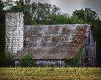 Old Country Barn. An old country barn is depicted in this photo with trees in the background and a yellow crop leading up to the barn which includes an old silo Royalty Free Stock Images
