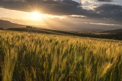 Typical sicilian rural countryside, sicilian home in background Stock Photography