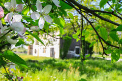 Old country house in a setting of flower Royalty Free Stock Photography