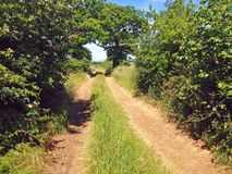 Old country lane, United Kingdom. An old country lane in England, United Kingdom. Trees and bushes line the dirt track Royalty Free Stock Photo
