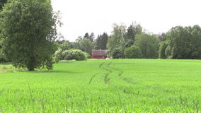 Old country painted house surrounded by trees along corn field. Zoom out from the old country brightly painted house surrounded by trees along the corn field stock video footage