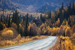 Old country road in autumn mountain forest Royalty Free Stock Image