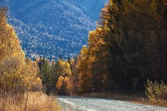Old country road in autumn mountain forest Royalty Free Stock Images