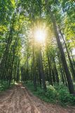 Old country road through beech forest. Wonderful nature scenery. tall trees with lush green crowns in may. sun among the branches stock photo