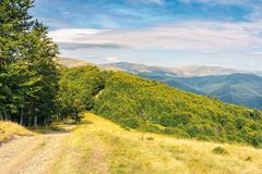 Old country road through hills in to the forest. Old country road through hills in to the primeval beech forest. nature scenery with trees along the way. sunny royalty free stock image
