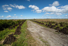 Old country road peat bog landscape. Old country road through peat bog landscape in Ireland Royalty Free Stock Image